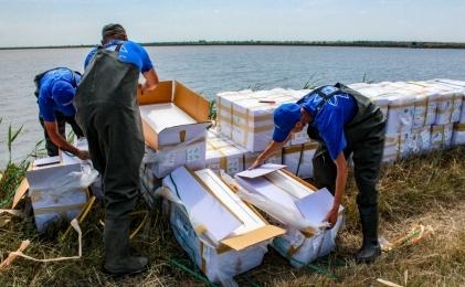 Компания «Эллас» выпустила 14 млн мальков креветки всвои естественные пруды вКрыму